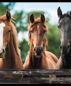 D-The-Horse-Trio-7116